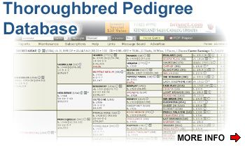 Thoroughbred Pedigree Software | Horses | Thoroughbred, Horses