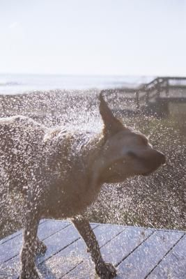 Ever Wondered What All That Shaking Your Dog Does Means Dogs