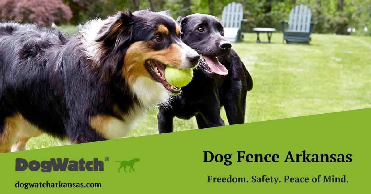 DogWatch® of Fayetteville Arkansas provides electronic