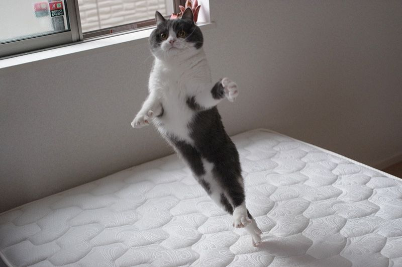 Leap............@guremike