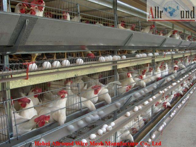 commercial poultry house pictures | Nigeria Control Poultry Farm Design