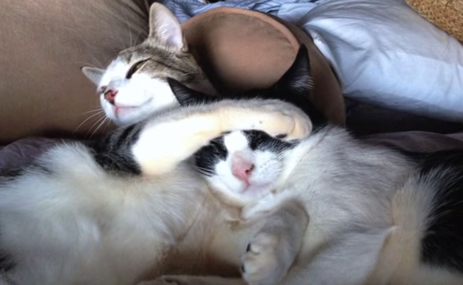Rescued Blind Cat Gets Second Shot At Life Thanks To His Seeing Eye Kitten Friend Video Cats Cat Crying Therapy Cat