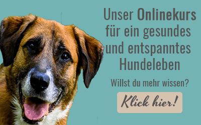Impressum Hunde Hundepflege Hundetraining