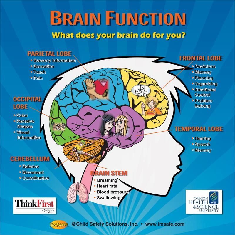 endocrine vs nervous system essays To do this, the hypothalamus acts as the connector between the endocrine and  nervous systems it plays a part in many essential functions of.
