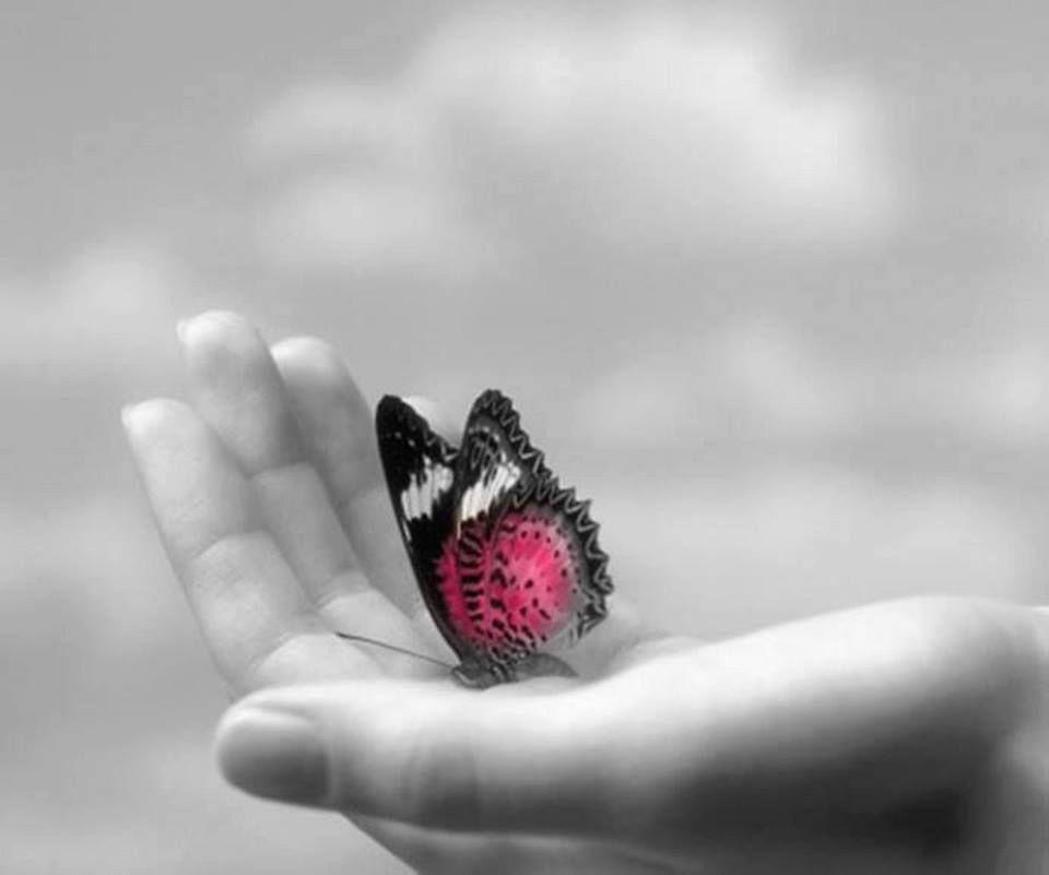 Красивые картинки все в твоих руках