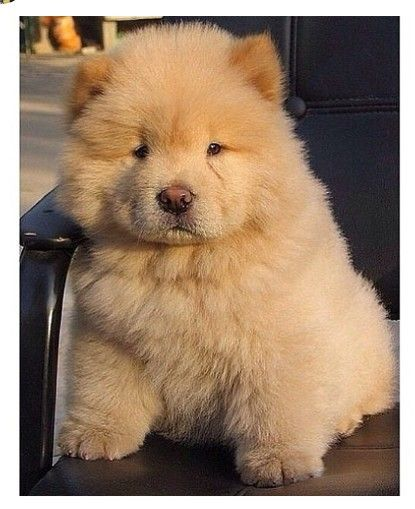 Que Coisa Fofaa Cute Baby Animals Puppies Cute Dogs