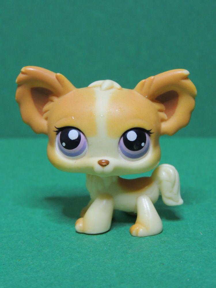 96 chien dog chihuahua papillon cream white lps - Chien pet shop ...