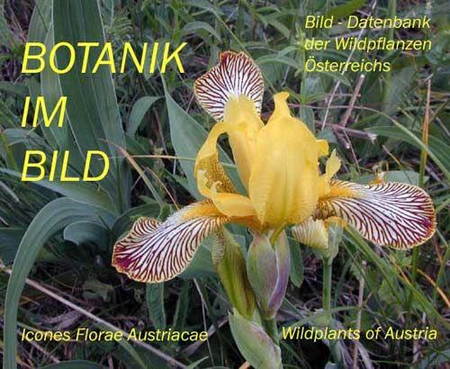 Botanik im Bild / Startseite