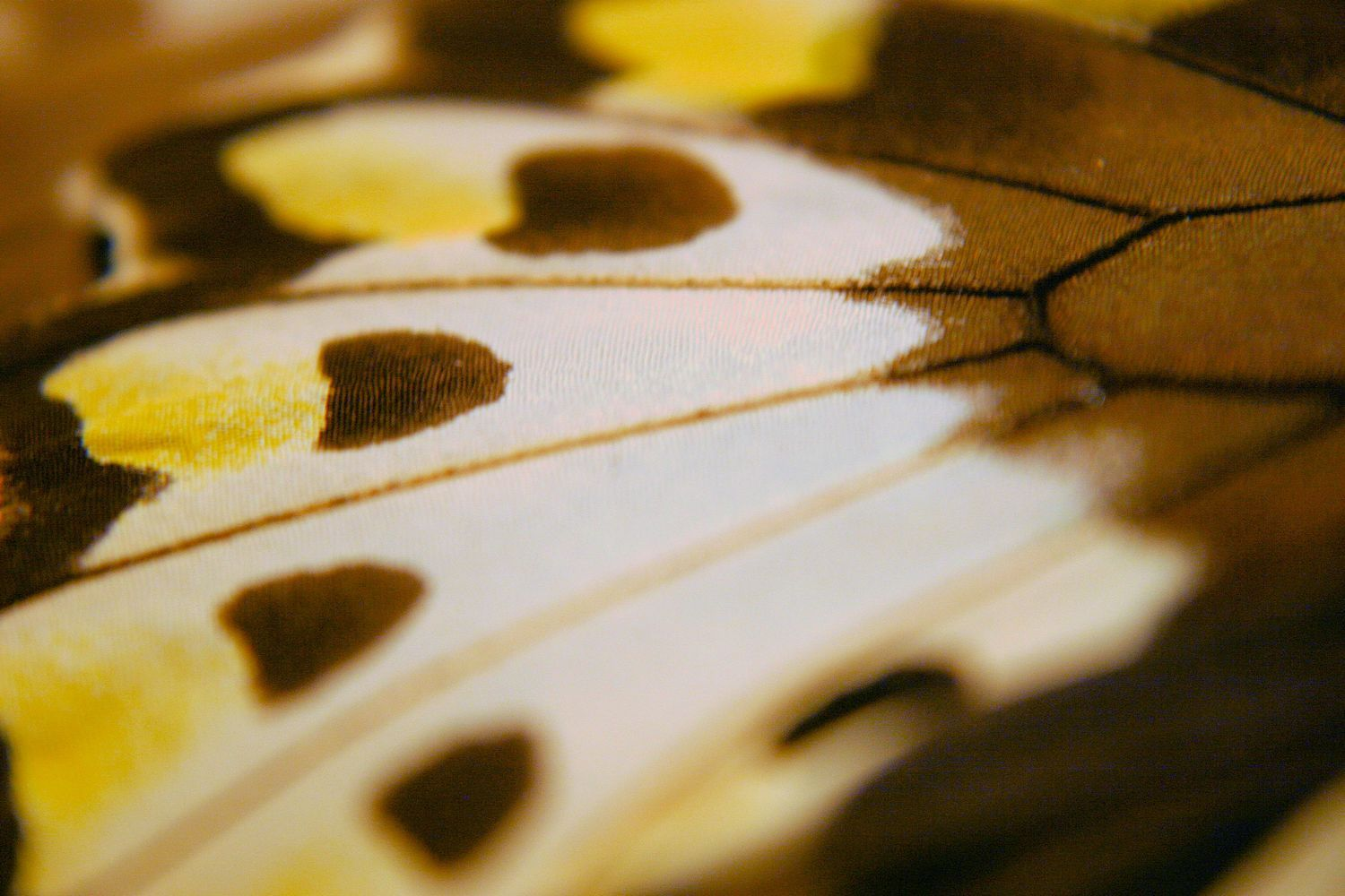 A Newfound Freedom: Butterfly Wing Patterns