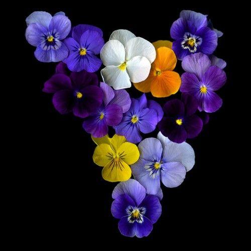 MY LOVE OF FLOWERS