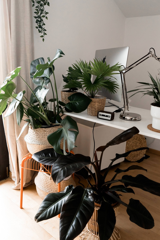 Mit Grunen Zimmerpflanzen Eine Tolle Oase Schaffen Der Grosse Grunpflanzen Guide Grune Zimmerpflanzen Grunpflanzen Pflanzen Zimmer