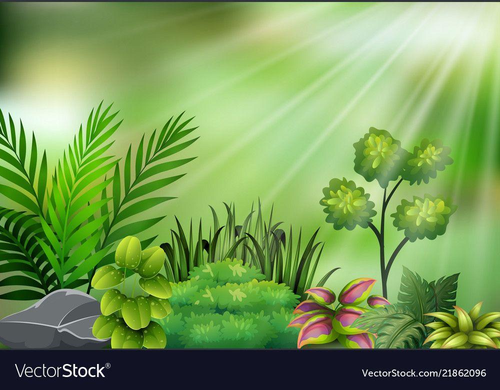 Botanical plant view on sun light vector image on