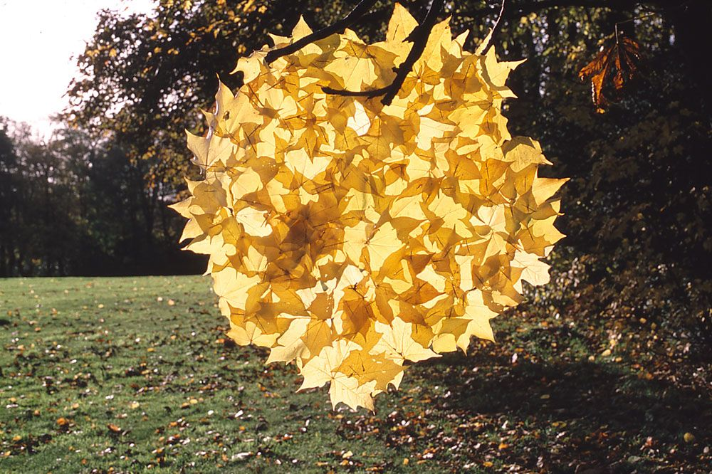 Andy Goldsworthy Blätter