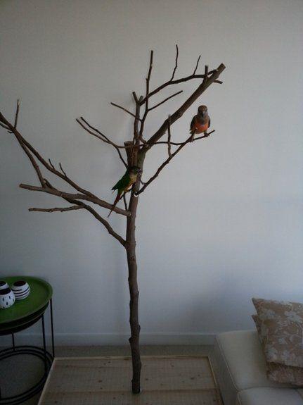 diy foraging tree stand diy bird toys parrot stuff. Black Bedroom Furniture Sets. Home Design Ideas