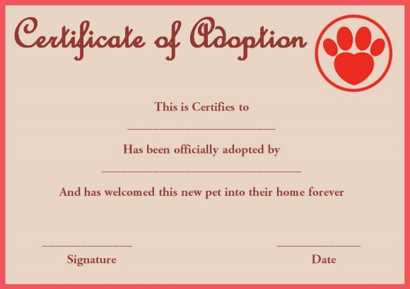 Pet Rock Adoption Certificate Template Pet Adoption Certificate