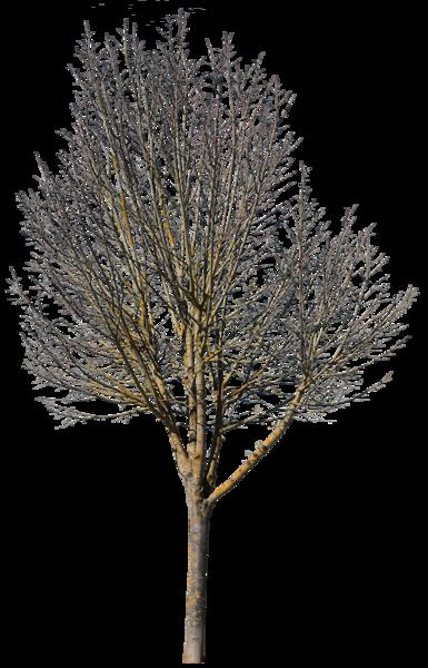Deciduous Tree Winter Vii Deciduous Trees Winter Trees Tree