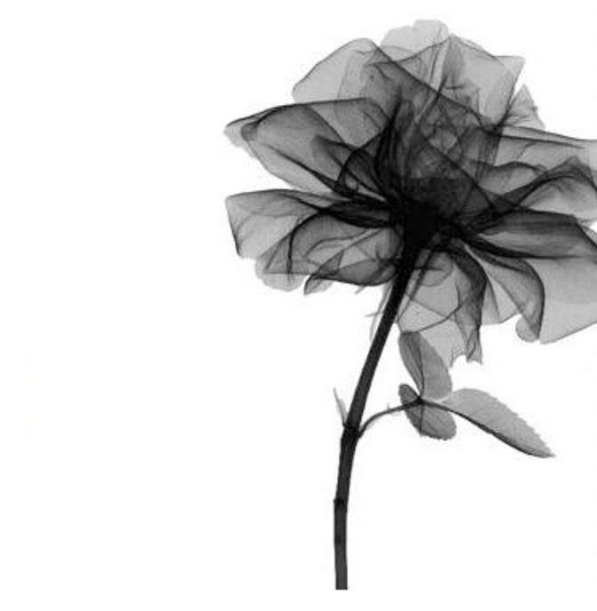 X Ray Of Rose Watercolor Amazing Tattoo For Me Yeti: Ray Flower Photo Xrayflower.jpg