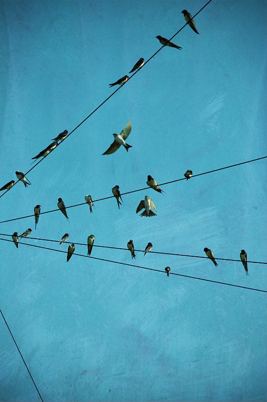 Swallow photo, birds photography, swallows art, swallow wall art ...