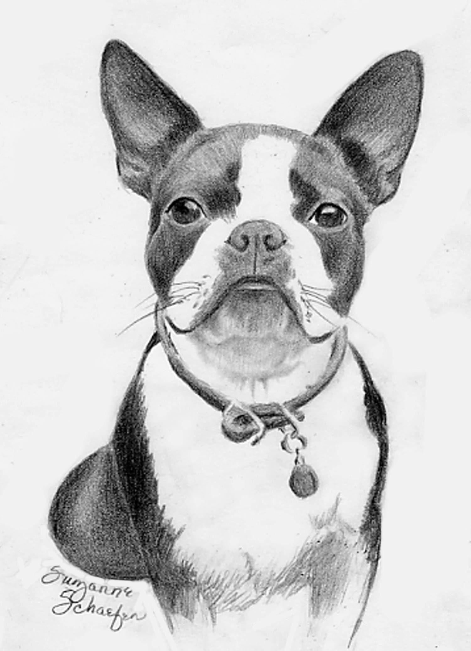 Boston Terrier 2 Jpg 1500 2072 Boston Terrier Drawings Boston
