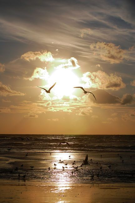 """""""Hark, now hear the sailors cry, smell the sea, and feel the sky, let your soul & spirit fly, into the mystic."""" -Van Morrison"""