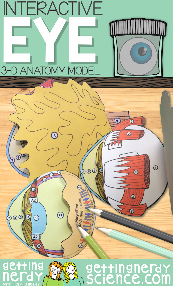 Eye Paper Dissection - Scienstructable 3D Dissection Model ...