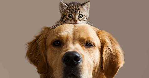 Pin Di Francesco Avezzano Su News Ed Altro Gatos Perros E
