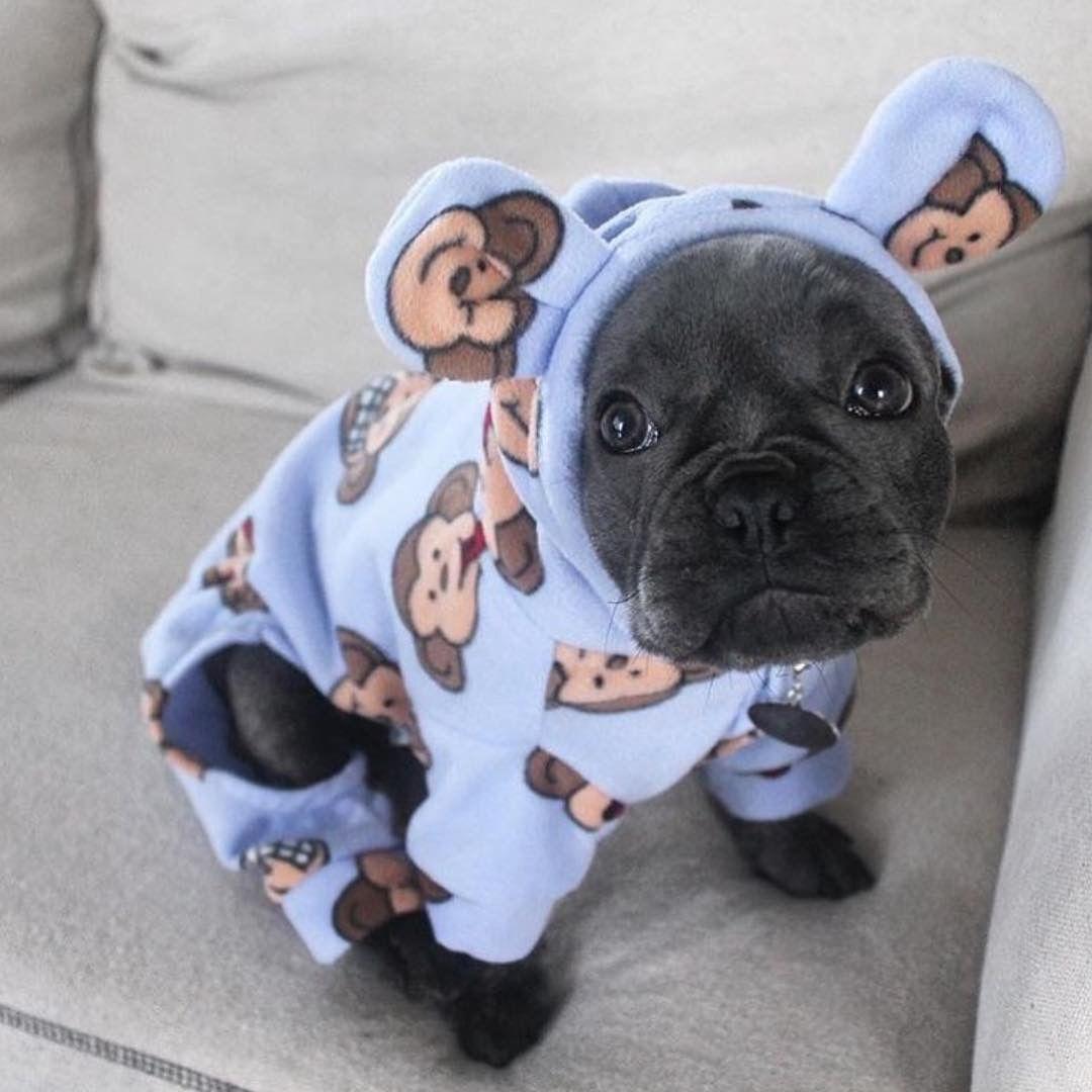 Pin Em Filhotes Puppies