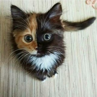 When your kitten printer runs out of ink midway. : aww