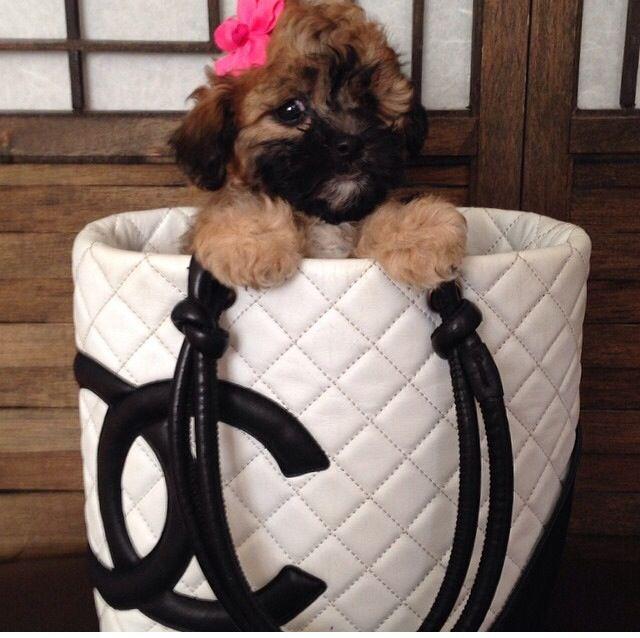 Puppy love !