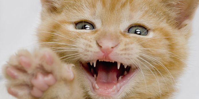 Where, When, and How Much to Feed your Cat Cat facts