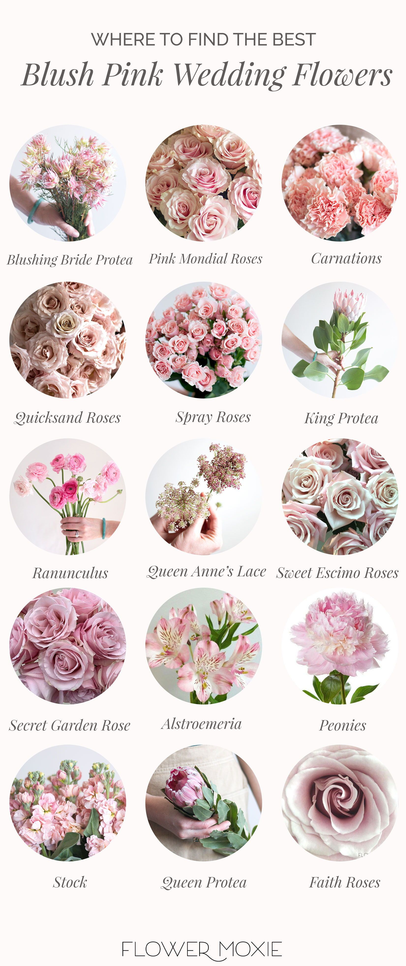 Shop All Of Our Bulk Fresh Wholesale Diy Wedding Flowers In Blush Pink Blushweddingflow Wedding Flower Types Fresh Wedding Flowers Blush Pink Wedding Flowers
