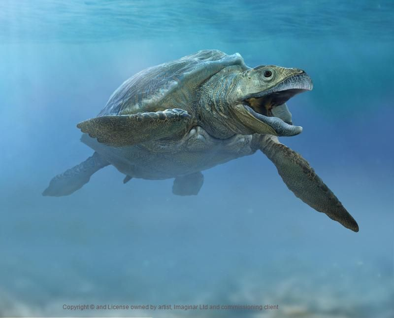 3d model of a giant prehistoric turtle.