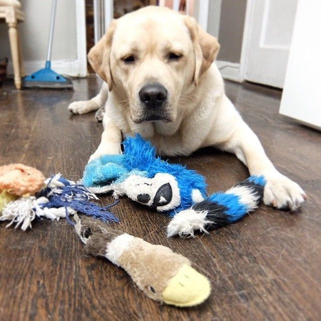 14 Dogs Who Didn T Mean To Destroy Their Stuffed Animals Dogs