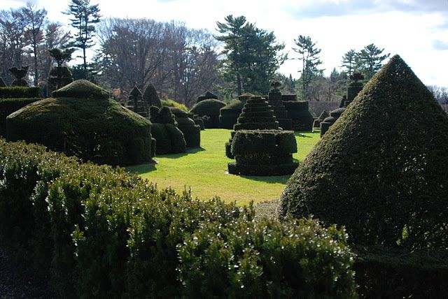 Wonderfully old yews, clipped various ways at Longwood Gardens, US