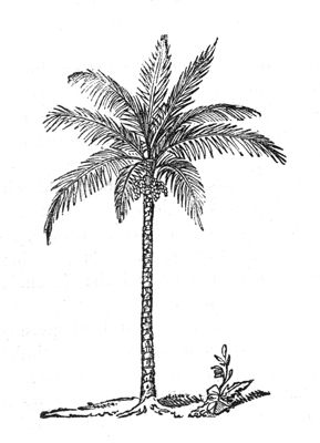 Palm tree illustration vintage google search palm tree illustration vintage google search pinterest illustrators draw and searching altavistaventures Images