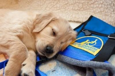 Canine Companions For Independence Interview Service Dogs
