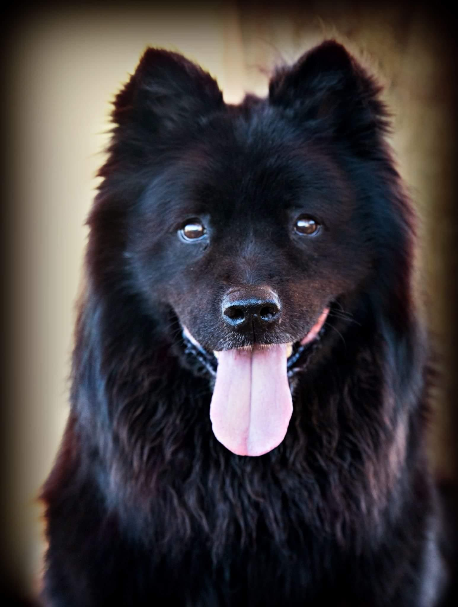 Adopt Sammy On Animal Welfare Society Adoption Puppies