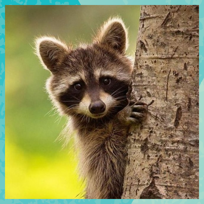 10 Trash Panda photos that prove to be the cutest animal in the world  Anima
