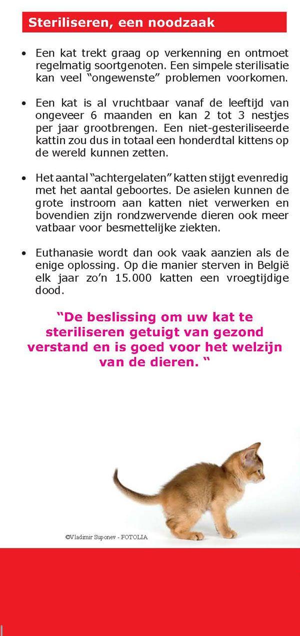 sterelisatie katten