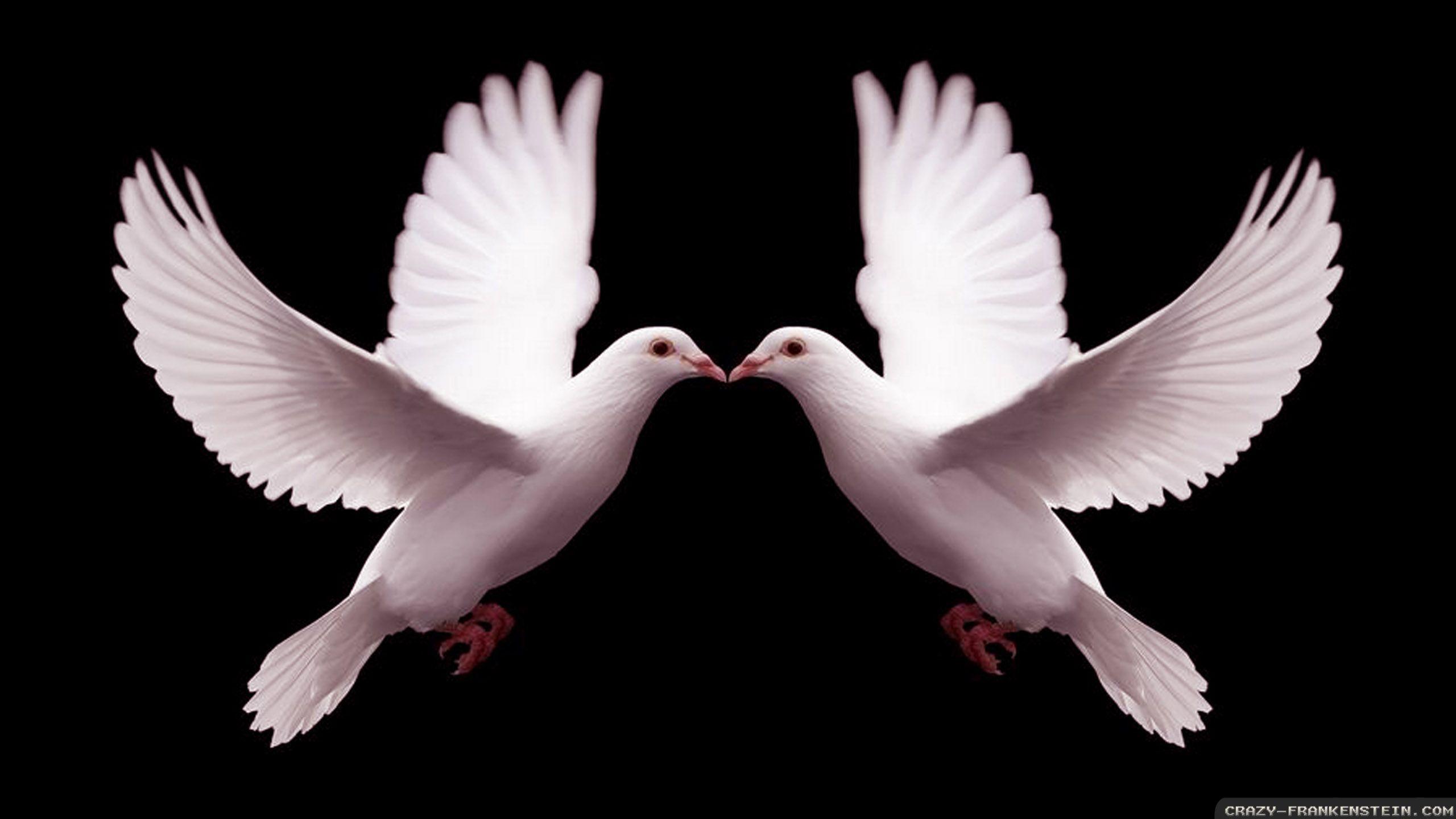 Kiss Kiss Sweet Dove Kisses Beauty Animals Birds Beautiful Birds