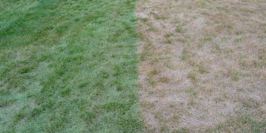 Is Painting Your Lawn Green A Drought Friendly Solution? Read This First! http://artificialturfexpress.com/is-painting-lawn-drought-friendly/?utm_content=buffer02720&utm_medium=social&utm_source=pinterest.com&utm_campaign=buffer #DroughtProblems