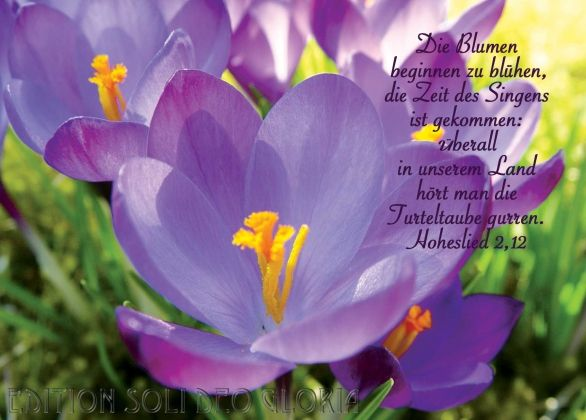 Christliche Postkarte 32 Hoheslied Fruhling Blumen Bibel A