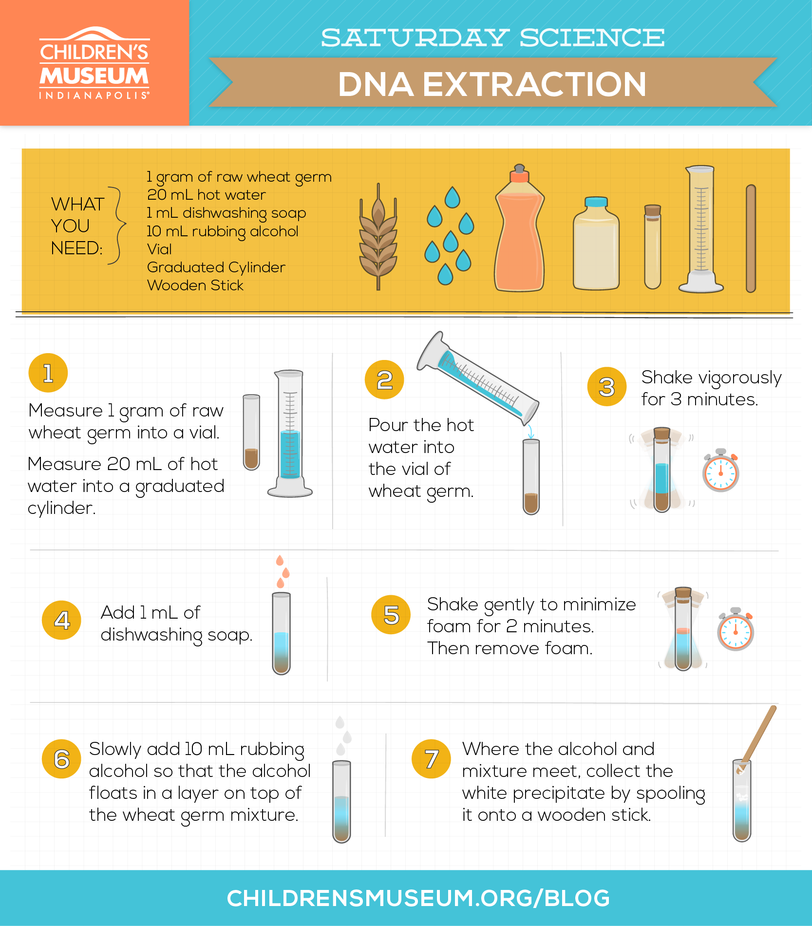 Saturday Science Dna Extraction From Wheat Germ