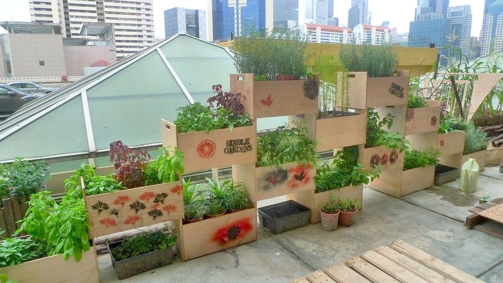 Urban rooftop farms in Singapore | Garden design plans ...