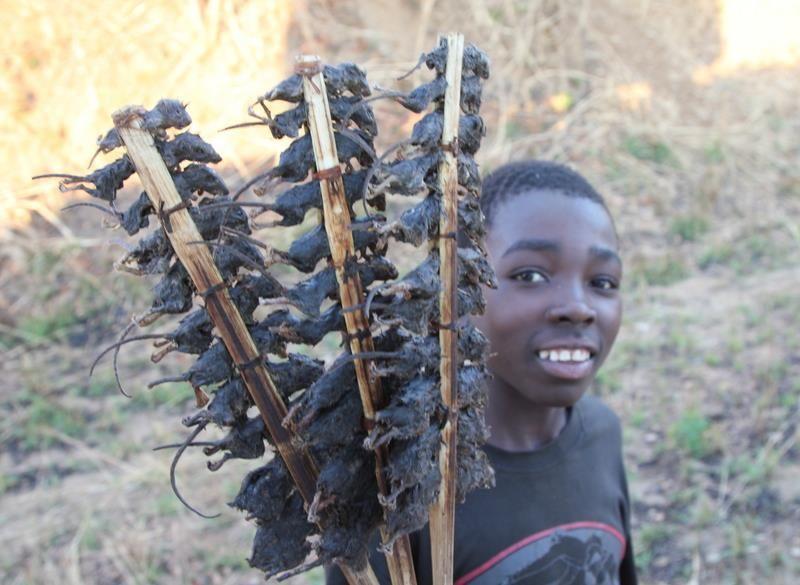 Malawi ...boy selling these roadside snacks
