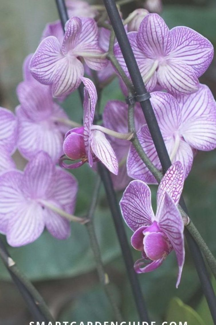 Photo of Phalaenopsis orchid care. Orchid care for beginners. Learn everything you need t…