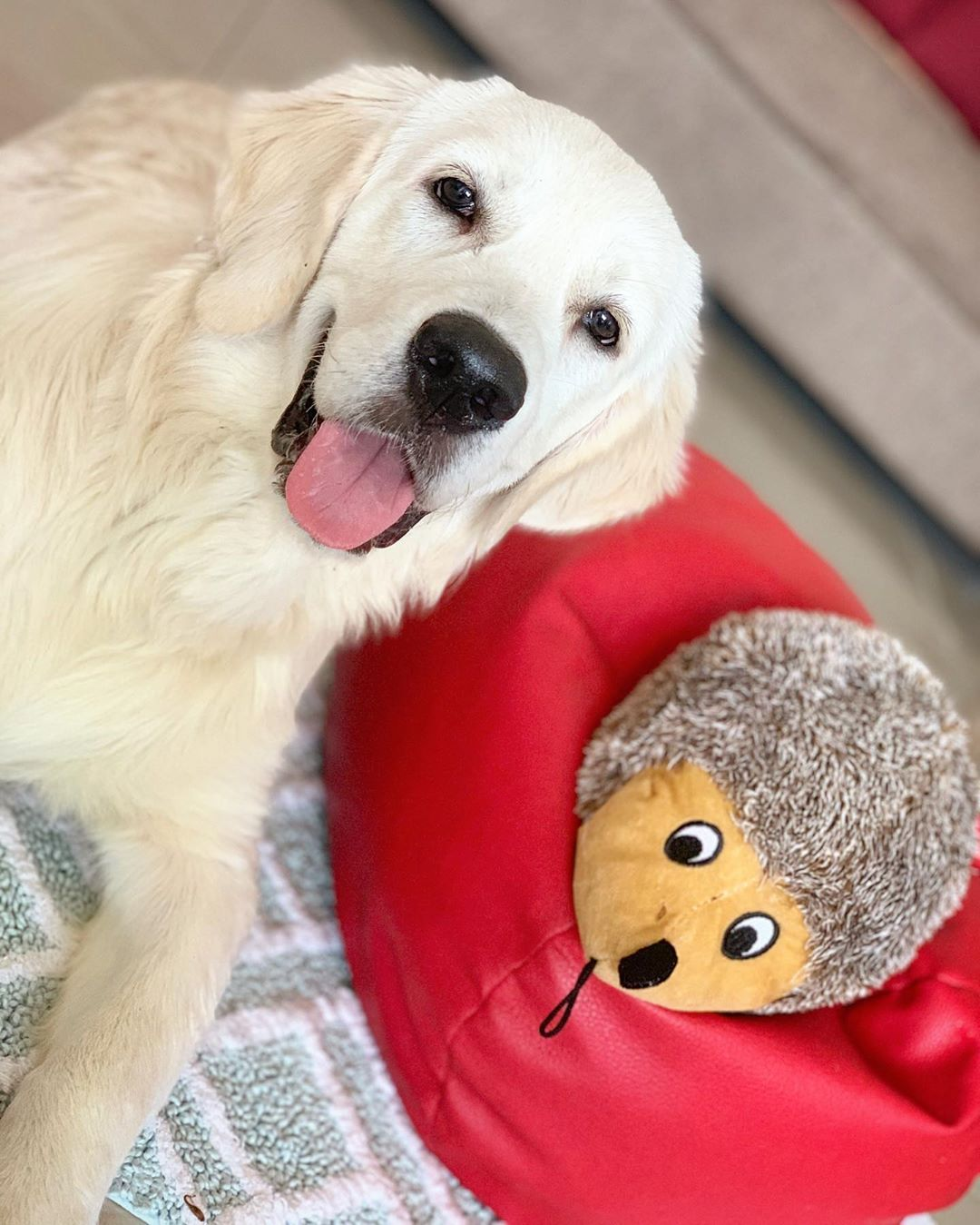 Dog Toys Big Buddy Collection Spike The Hedgehog Online In India