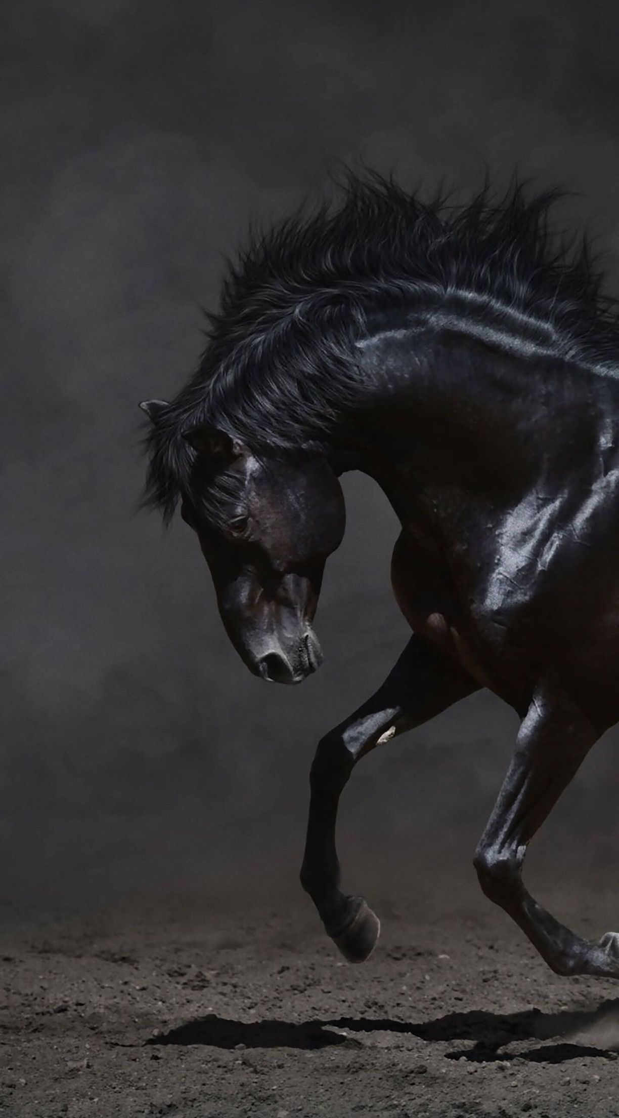 جمال الخيل Horse Wallpaper Beautiful Horses Horses