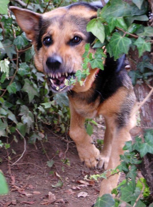 Single Post Aggressive Dog Dog Training Dog Biting Training