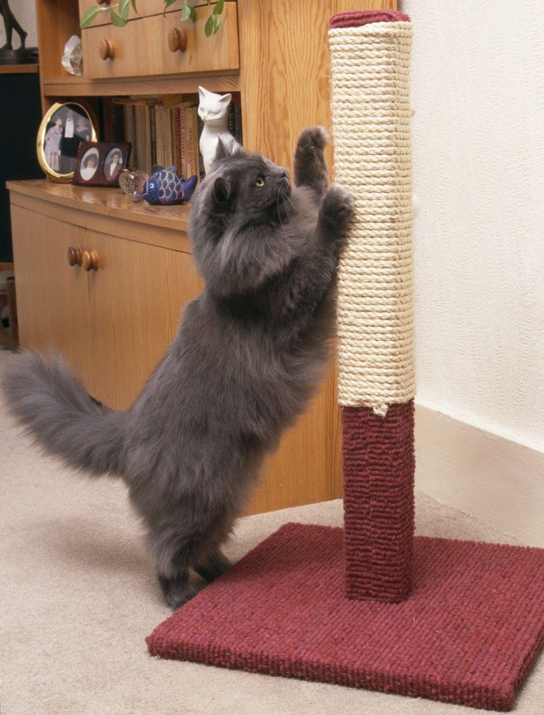 comment empecher un chat de faire ses griffes partout